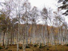 秋のポレポレウォーク_f0019247_2323791.jpg