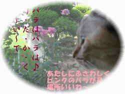 b0151748_1840315.jpg
