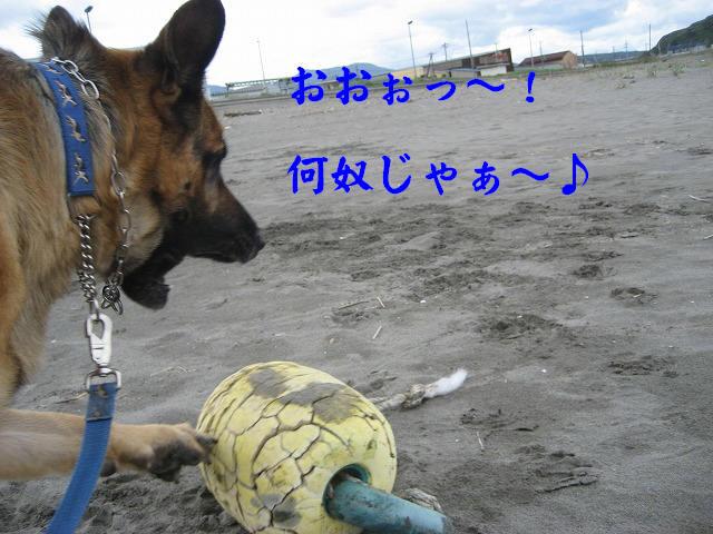 f0146769_22462032.jpg