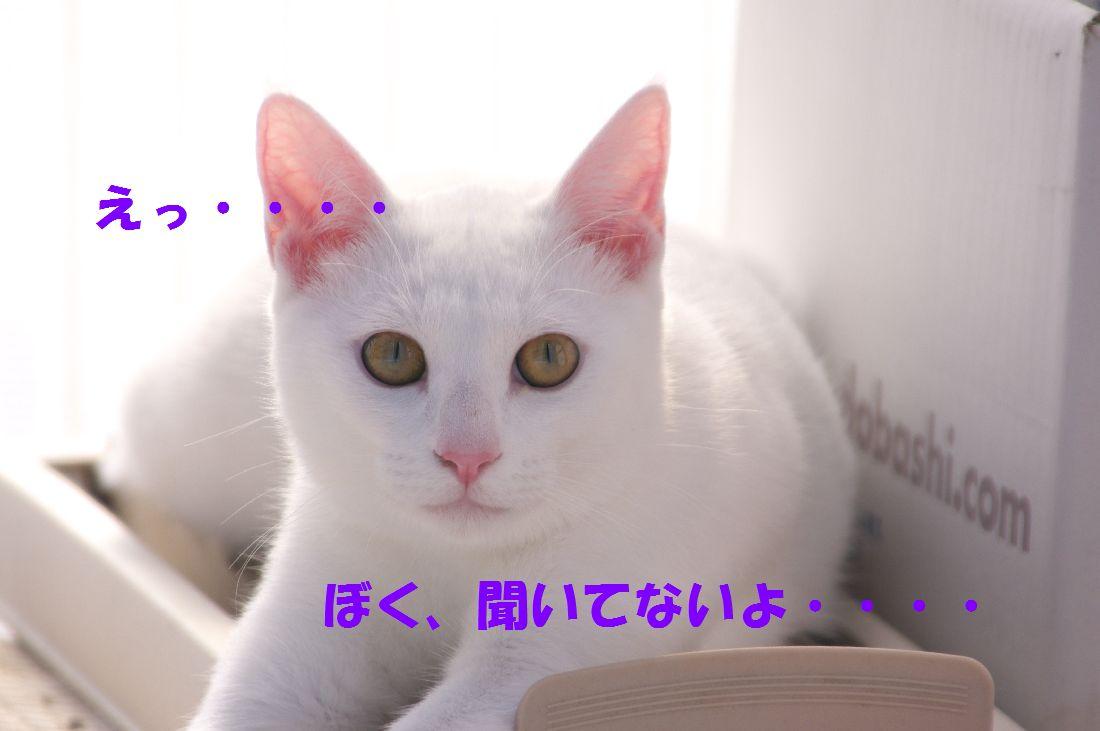 f0197682_2244242.jpg
