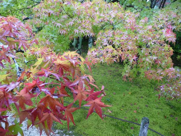 静かな雨の紅葉、宝福寺。_e0173183_23422781.jpg