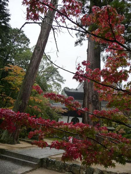 静かな雨の紅葉、宝福寺。_e0173183_2342368.jpg