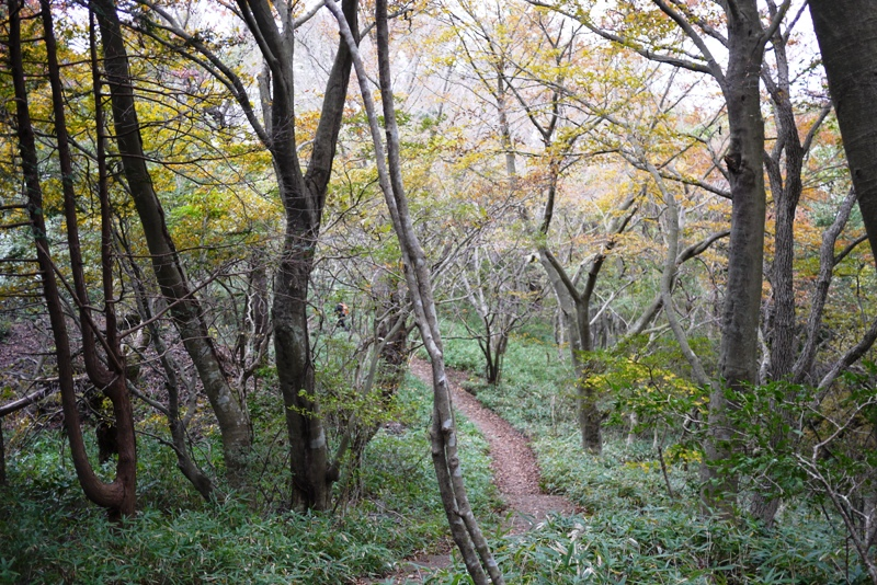 筑波山③ 自然研究路_a0127090_12443657.jpg