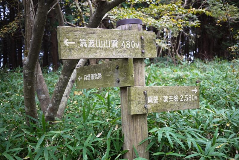 筑波山③ 自然研究路_a0127090_12445519.jpg