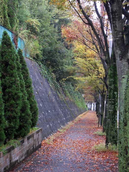 秋の風情_e0016894_10252439.jpg