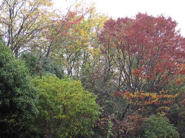 秋の風情_e0016894_10254538.jpg