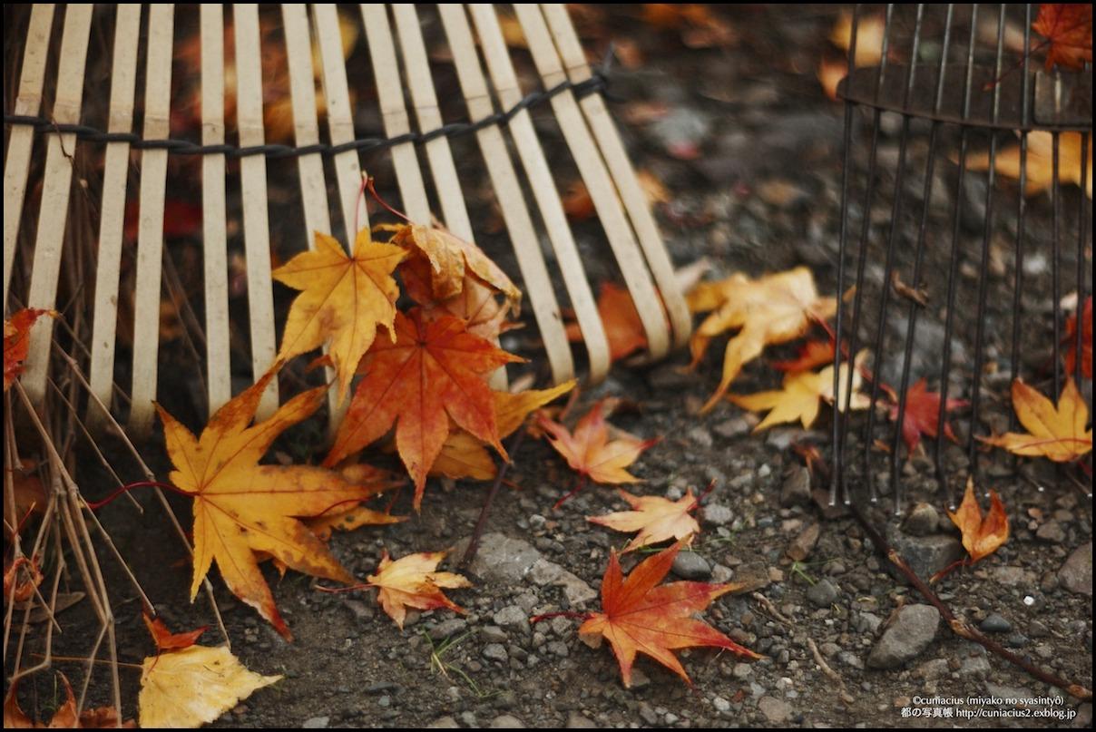 秋の仕事_f0042194_1212055.jpg
