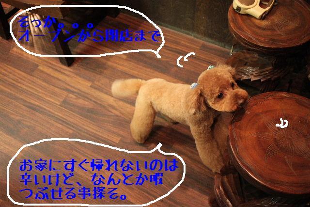 b0130018_919796.jpg