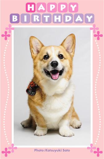 菊姫ちゃん、お誕生日おめでとう♪_d0102523_0471957.jpg