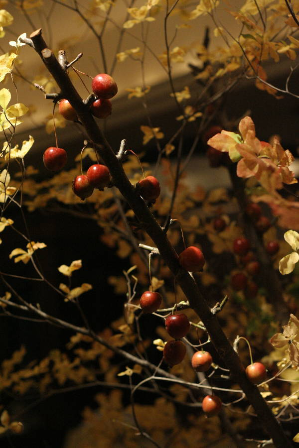 シェ松尾青山サロン様の装花 紅葉と、赤でかわいく_a0042928_18563735.jpg