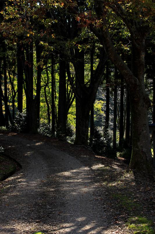#1135 樹木公園_b0177233_5374460.jpg