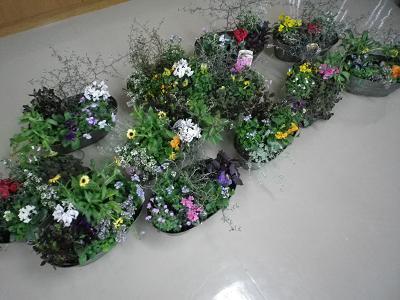 ビオラ・パンジー祭りと寄せ植え教室_e0086738_2031871.jpg