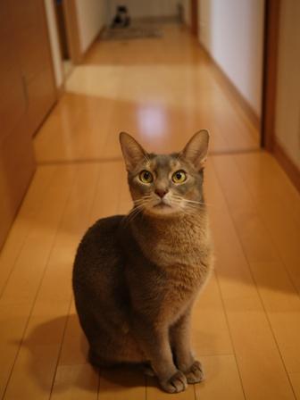 猫のお友だち 庄九朗くん来未ちゃん編。_a0143140_21462611.jpg