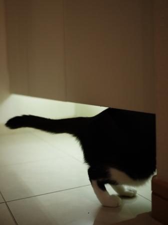 猫のお友だち 庄九朗くん来未ちゃん編。_a0143140_21472671.jpg