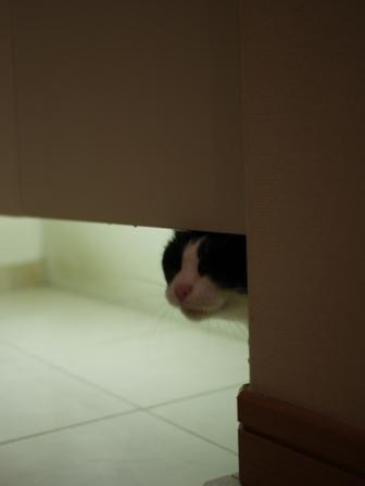 猫のお友だち 庄九朗くん来未ちゃん編。_a0143140_21505564.jpg