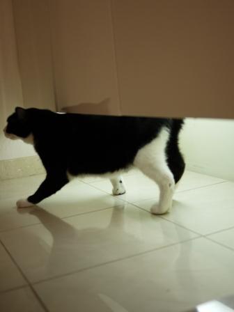 猫のお友だち 庄九朗くん来未ちゃん編。_a0143140_21513028.jpg