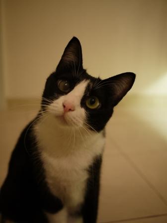 猫のお友だち 庄九朗くん来未ちゃん編。_a0143140_21521457.jpg