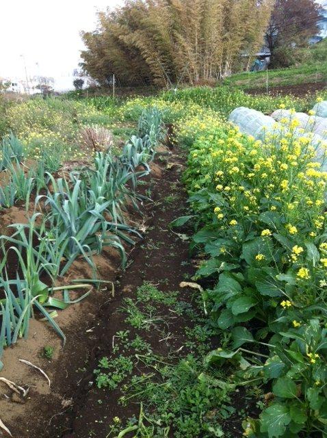 野生のルーコラ&オータムポエムの花・・競って咲いています_c0222448_14375186.jpg