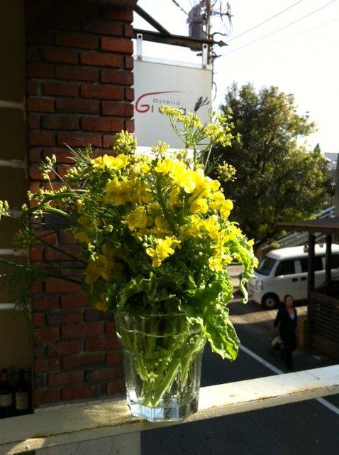 野生のルーコラ&オータムポエムの花・・競って咲いています_c0222448_1438887.jpg