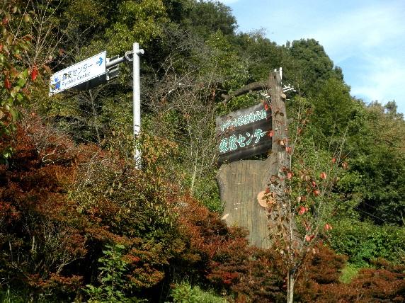 和歌山県植物公園緑花センター _b0093754_23295672.jpg