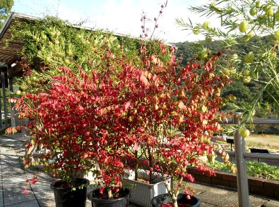 和歌山県植物公園緑花センター _b0093754_23302787.jpg