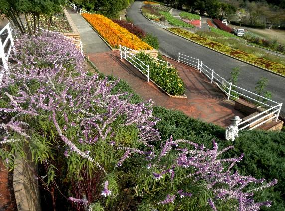 和歌山県植物公園緑花センター _b0093754_23303527.jpg