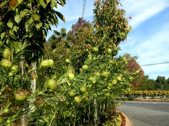 和歌山県植物公園緑花センター _b0093754_2330911.jpg