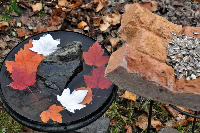 秋の庭の愛しのシジュウカラ。_b0165760_21512172.jpg