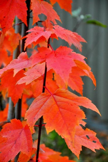秋の庭の愛しのシジュウカラ。_b0165760_21542427.jpg