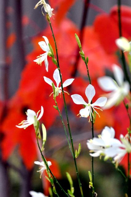 秋の庭の愛しのシジュウカラ。_b0165760_2156888.jpg