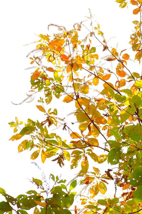 ■■ Jewel in Autumn ■■_c0195662_22493960.jpg