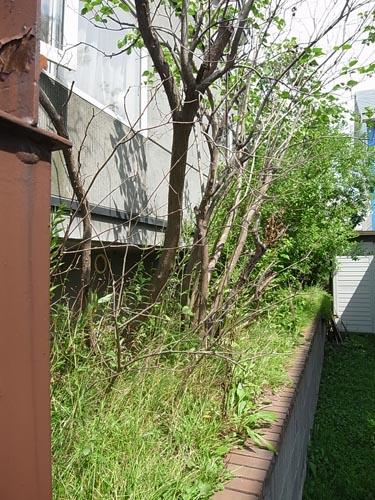 いえのえほん40/平岡K邸改修実施_c0189970_1353864.jpg