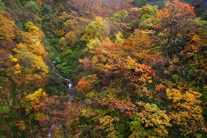 新潟 胎内渓谷の紅葉 その2_e0165983_1056535.jpg