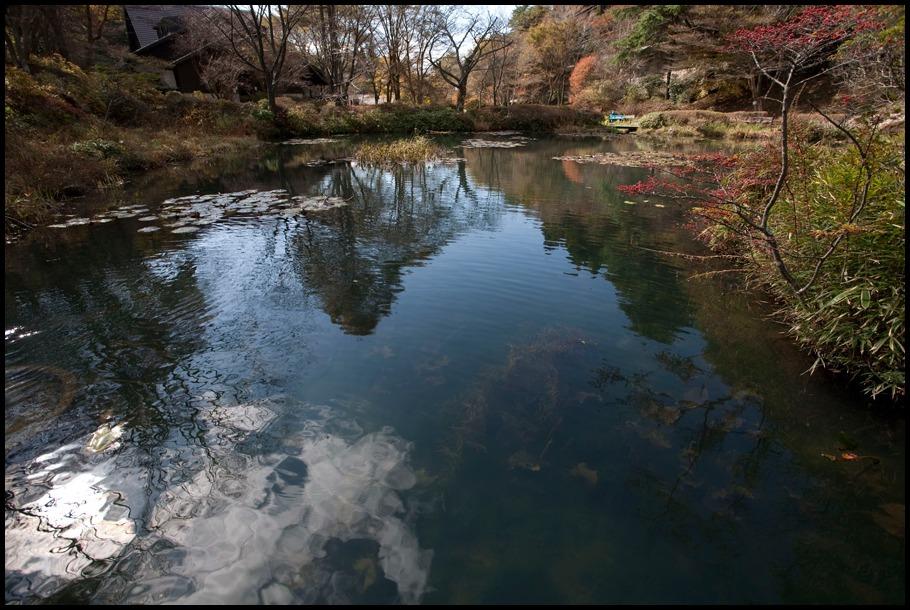 六甲山の秋2011―高山植物園―_b0043304_2129276.jpg