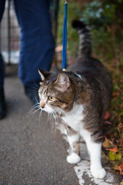 散歩猫_c0162926_1725816.jpg