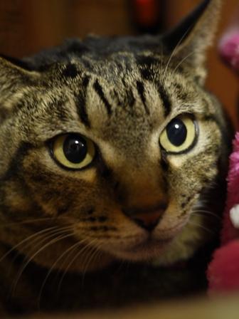 猫のお友だち 珊瑚ちゃん祿太くん編。_a0143140_21153915.jpg