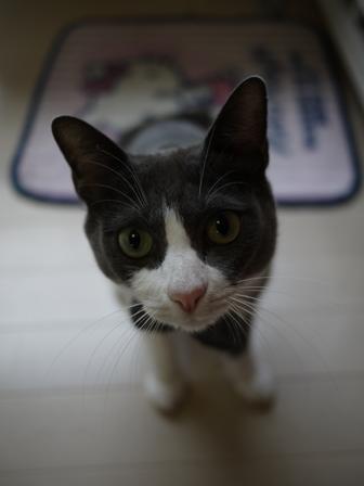 猫のお友だち 珊瑚ちゃん祿太くん編。_a0143140_216465.jpg