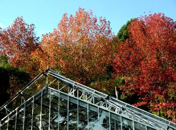 和歌山県植物公園緑花センター _b0093754_2323517.jpg