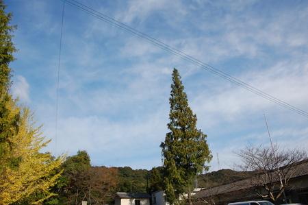 岬高校第1学年植樹サポート in 孝子の森_c0108460_189427.jpg