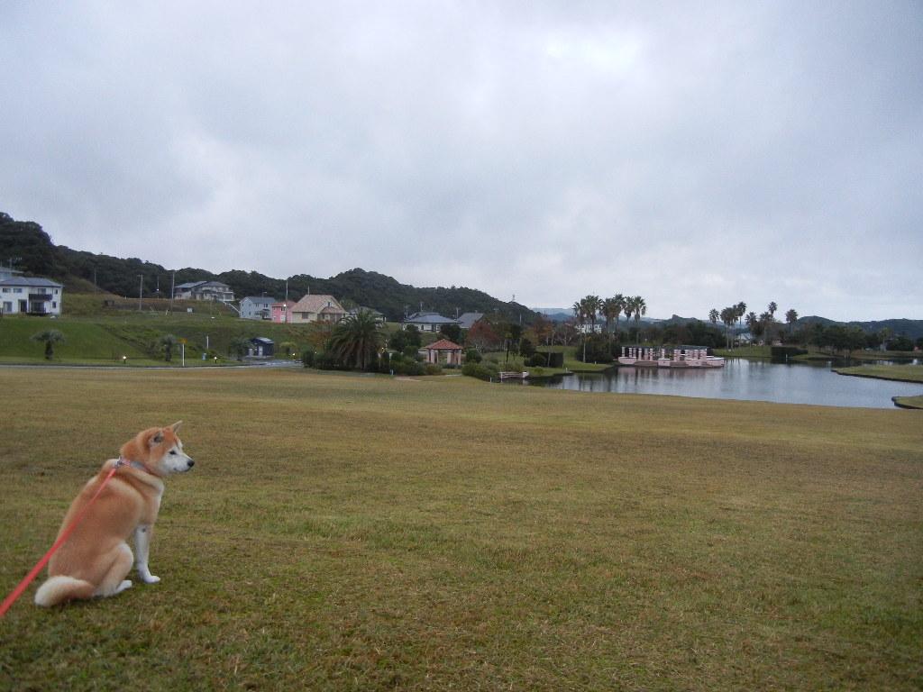 2011年11月8日(火)立冬でやや寒!_f0060461_1514949.jpg