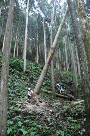 第9回 吉野の山を見るツアー_e0164563_1219353.jpg