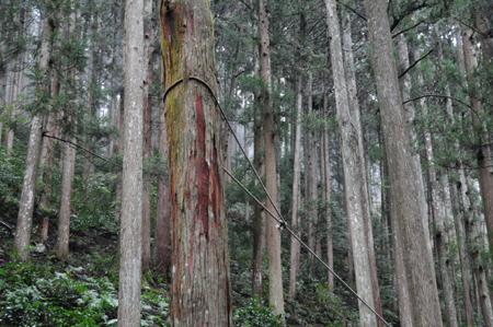 第9回 吉野の山を見るツアー_e0164563_1219657.jpg