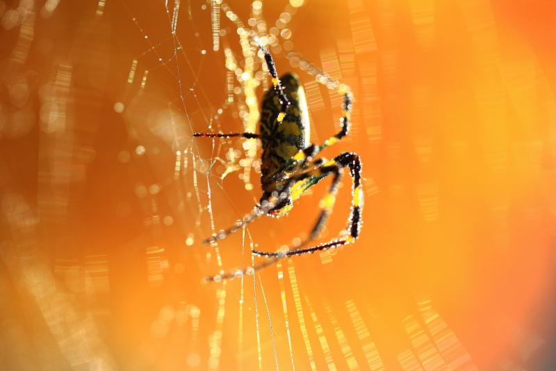 秋の女郎蜘蛛_e0183063_948221.jpg