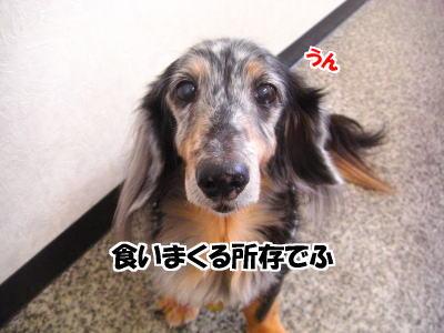 d0020869_11532110.jpg
