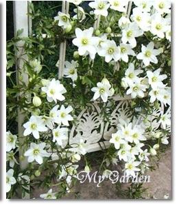 ホワイトガゼボが素敵です~♪_f0029571_1261467.jpg