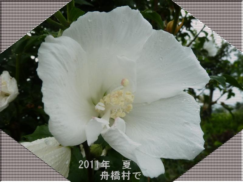 c0129682_19581657.jpg