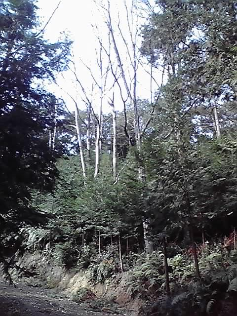 林業・・_e0037600_1823538.jpg