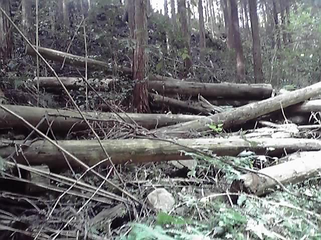 林業・・_e0037600_1826945.jpg