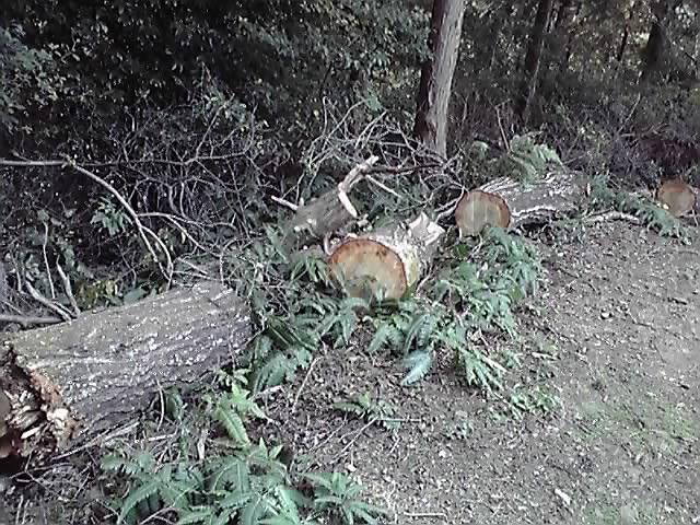 林業・・_e0037600_1827139.jpg
