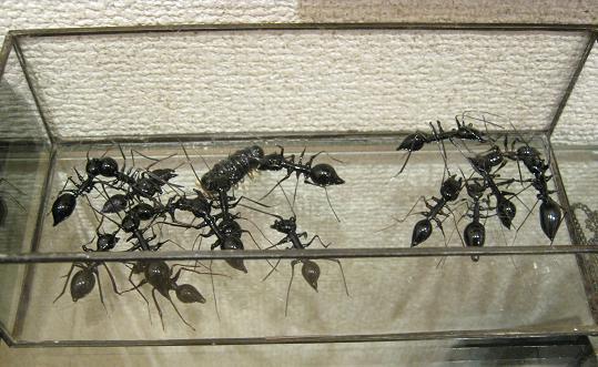 もぞもぞ 虫・蟲 展 - mozomozo mushimushi ten -      たまごの工房 企画展その9_e0134502_1416651.jpg